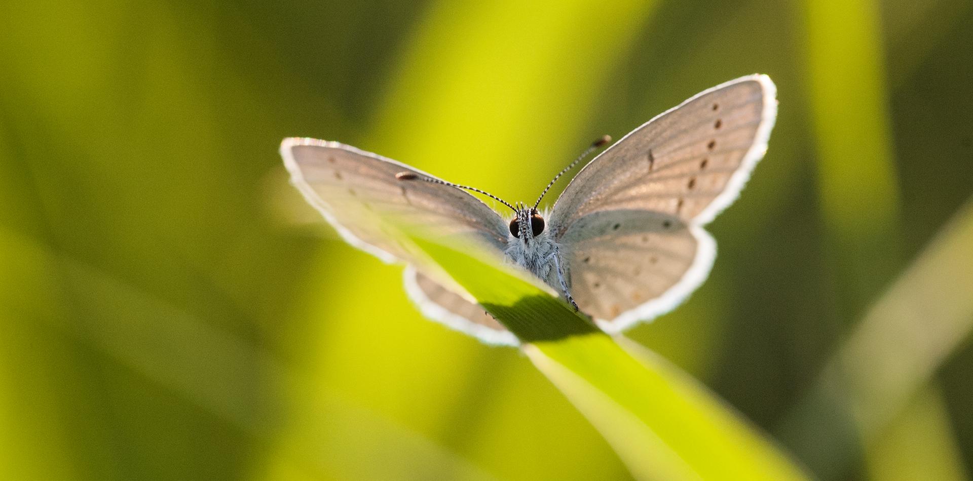 Motyle zdjęcia makro lublin